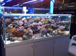 Saltwater Aquarium Supplies